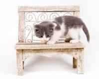 Gatito en un banco Fotos de archivo