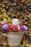 Gatito en un florero Foto de archivo
