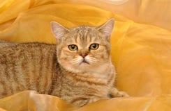 Gatito en un fondo amarillo Imágenes de archivo libres de regalías