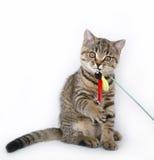 Gatito en un fondo blanco Foto de archivo libre de regalías