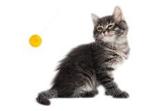 Gatito en un fondo blanco Imagen de archivo libre de regalías