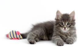 Gatito en un fondo blanco Foto de archivo