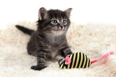 Gatito en un fondo blanco Fotografía de archivo libre de regalías