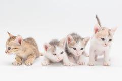 Gatito en un fondo blanco Fotos de archivo