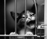 Gatito en un griterío de la jaula Imagen de archivo