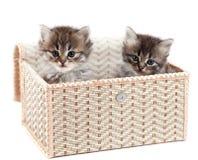 Gatito en un rectángulo de regalo fotografía de archivo libre de regalías