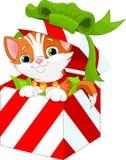 Gatito en un rectángulo de regalo de la Navidad Fotografía de archivo