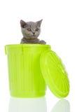 Gatito en un trashcan Foto de archivo