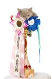 Gatito en un trofeo de oro grande foto de archivo
