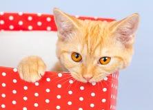 Gatito en una caja de regalo Fotos de archivo
