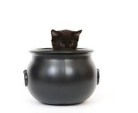 Gatito en una caldera fotos de archivo