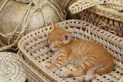 Gatito en una cesta Imágenes de archivo libres de regalías