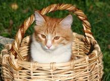 Gatito en una cesta Foto de archivo