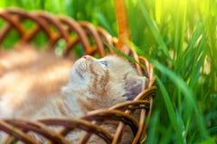 Gatito en una cesta Imagenes de archivo