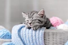 Gatito en una cesta con las bolas del hilado Foto de archivo libre de regalías
