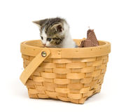 Gatito en una cesta en el fondo blanco Fotografía de archivo