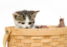 Gatito en una cesta en el fondo blanco Imagen de archivo libre de regalías