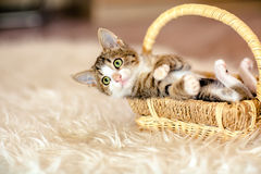 Gatito en una cesta que miente en la suya detrás edad 1 mes Foto de archivo