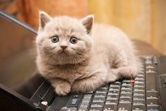 Gatito en una computadora portátil Fotos de archivo