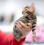 Gatito en una mano femenina Foto de archivo libre de regalías