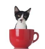 Gatito en una taza fotos de archivo