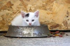 Gatito encantador en jugar del plato del alimento Foto de archivo