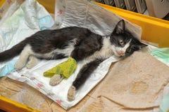 Gatito enfermo fotografía de archivo
