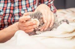 Gatito enfermo Foto de archivo libre de regalías