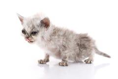 Gatito enfermo en el fondo blanco imagen de archivo