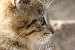 Gatito enfocado Imágenes de archivo libres de regalías