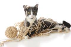 Gatito Enredado-Para arriba Fotografía de archivo libre de regalías