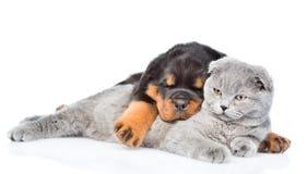 Gatito escocés del abarcamiento del perrito de Rottweiler Aislado en los vagos blancos Imágenes de archivo libres de regalías