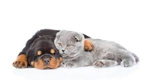 Gatito escocés del abarcamiento del perrito de Rottweiler En blanco Foto de archivo libre de regalías