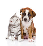 Gatito escocés y perrito lindo Aislado en el fondo blanco Imagen de archivo