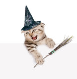 Gatito escocés con el sombrero para Halloween y con el palillo de la escoba de brujas que mira hacia fuera debido al cartel Aisla Foto de archivo