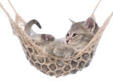 Gatito estriado lindo que duerme en la hamaca aislada Fotos de archivo libres de regalías