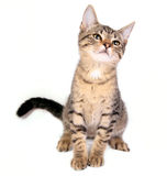 Gatito feliz Foto de archivo