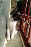 Gatito Gatito fotos de archivo