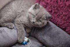 Gatito gris Foto de archivo libre de regalías
