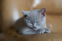 Gatito gris el dormir imagen de archivo