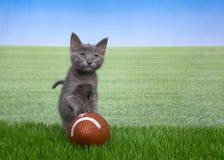 Gatito gris en hierba con un fútbol miniatura foto de archivo libre de regalías