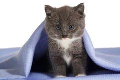 Gatito gris en la manta Foto de archivo libre de regalías