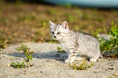 Gatito gris en una arena gris en la hierba Fotos de archivo