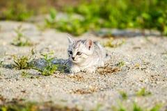 Gatito gris en una arena gris en la hierba Imagen de archivo libre de regalías