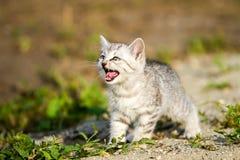 Gatito gris en una arena gris en la hierba Foto de archivo libre de regalías