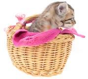 Gatito gris en una cesta Foto de archivo