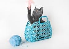 Gatito gris en una cesta plástica con una bola del hilado Fotografía de archivo libre de regalías