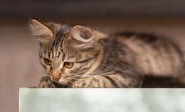 Gatito gris hermoso que se sienta en la hierba y que mira para arriba fotos de archivo