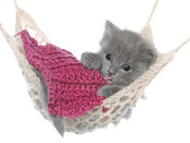 Gatito gris lindo debajo de una manta dormida en una hamaca Imágenes de archivo libres de regalías