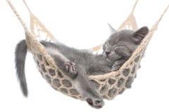Gatito gris lindo que duerme en la hamaca aislada Fotografía de archivo libre de regalías